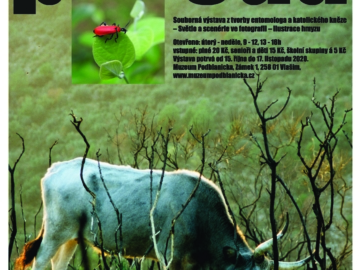 Příroda - Matúš Kocian